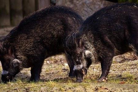 Prevenzione danni da fauna - pubblicato il bando per l'acquisto di presidi