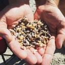 Domande al via per la trasformazione dei prodotti della pesca e dell'acquacoltura e per accedere al sostegno per compensare l'arresto temporaneo dell'attività