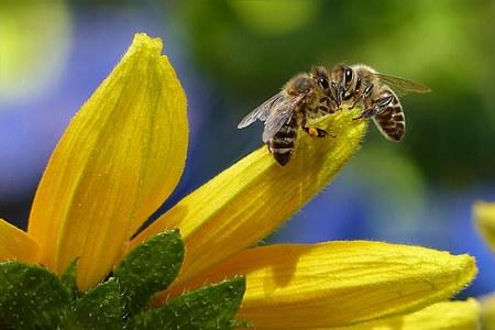 Aiutiamo le api e difendiamo i nostri giardini e orti dagli attacchi delle cimici