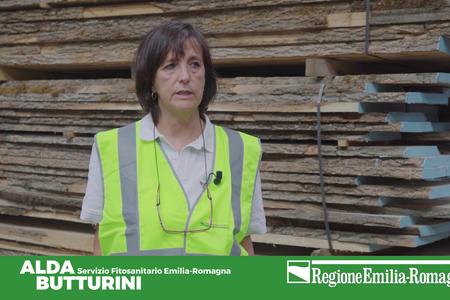 Conoscere e sorvegliare Aromia bungii, temibile insetto a rischio di introduzione in Emilia-Romagna