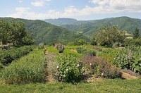 Mettiamo radici per il futuro, si allarga il corridoio verde dell'Emilia-Romagna
