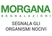 Segnala a Morgana insetti e organismi nocivi con un semplice click
