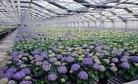 Focus sul Nuovo regime fitosanitario