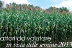 In Emilia-Romagna continua l'espansione della Diabrotica
