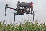 Mais, l'impiego dei droni nella lotta alla Piralide