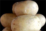 """Patate: varietà resistenti al """"nematode dorato"""""""