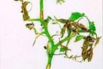 Giovane-pianta