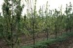 riduzione della vegetazione