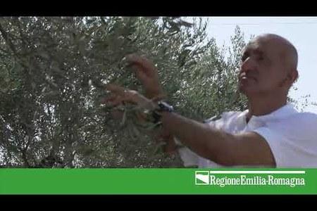 Xylella fastidiosa – come riconoscerla, prevenirla, contrastarla