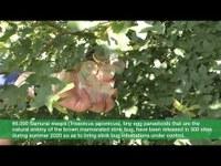 La sorveglianza fitosanitaria in Emilia-Romagna