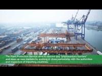 L'export dei prodotti ortofrutticoli