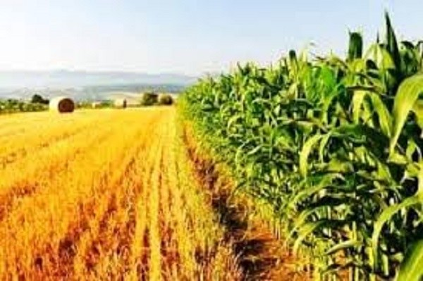 AgriCultura2.jpg