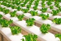 Regions 4Food: casi di successo nella digitalizzazione del settore agroalimentare