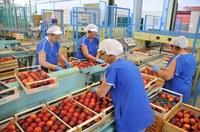 Stop alle pratiche commerciali sleali tra imprese della filiera agroalimentare