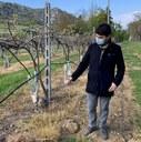 Danni da gelate, compromessa gran parte della produzione frutticola e vitivinicola
