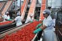 Pomodoro da industria del Nord Italia, raggiunto l'accordo