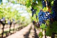 Online la graduatoria dei progetti finanziati dal Bando OCM vino promozione sui Mercati dei Paesi Terzi