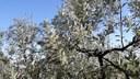 Via libera a tre decreti per sostenere i settori olivicolo e vitivinicolo