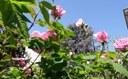 Giardini d'Autore, il verde e la cultura faranno rifiorire Rimini