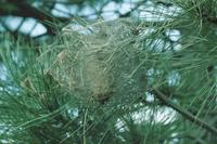 Riprende la pubblicazione dei bollettini per la difesa del verde ornamentale
