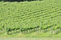 """Schema di decreto sui vini generici: """"Troppo penalizzante per l'Emilia-Romagna"""""""