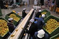Altri 48 milioni per la ripartenza: sostegno alle imprese di vari settori tra cui anche quelle agricole