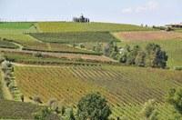 Dichiarazioni vitivinicole di vendemmia e produzione, apertura del sistema SitiFarmer