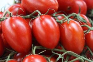 Pomodoro da industria, una campagna eccellente per quantità e qualità