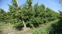 Verso il riordino del Servizio fitosanitario nazionale dei settori vite, fruttiferi e ortive