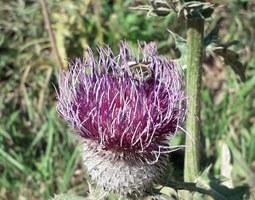 A rischio estinzione quasi il 9% di api, vespe, mosche e farfalle