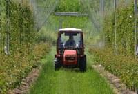 Aggiornamento proroghe di validità per patentini fitosanitari, altre abilitazioni e attestati