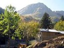 Abetina reale, tutela ambientale nel Parco Tosco Emiliano