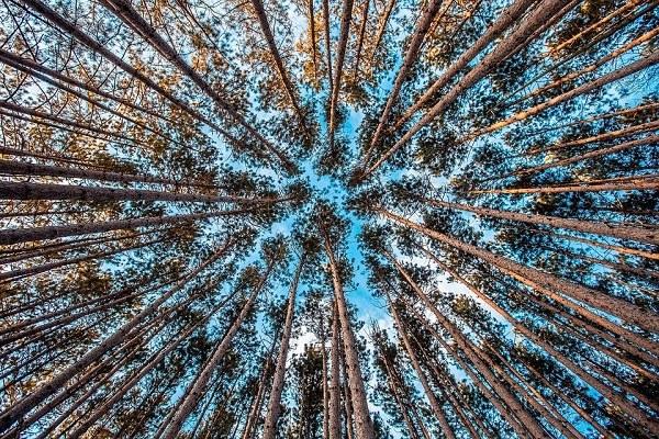 ecosistemi forestali