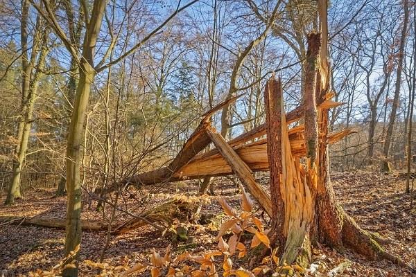 Foreste danneggiate