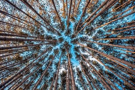 Altri progetti finanziati a favore degli ecosistemi forestali