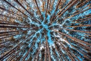 Ecosistemi e foreste