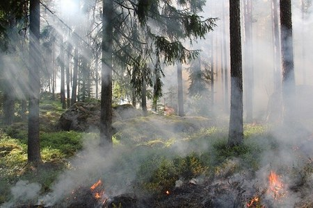 Incendi boschivi: scatta la fase di attenzione