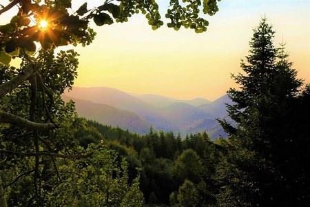 Piani di gestione forestali integrati e più sostenibili. Oltre 520 mila euro per la programmazione degli interventi