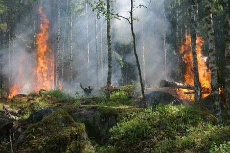 Incendi boschivi: Bollettino Verde fino alla mezzanotte del 31 ottobre