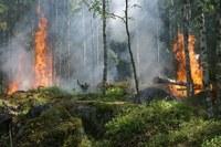 Prorogata al 18 aprile la fase di attenzione per gli incendi boschivi