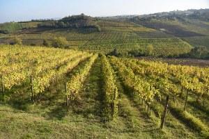 L'agricoltura dell'Emilia-Romagna è a portata di click: dai progetti per l'innovazione alle buone prassi aziendali